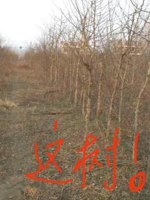 河南省南阳市南召县皂角树