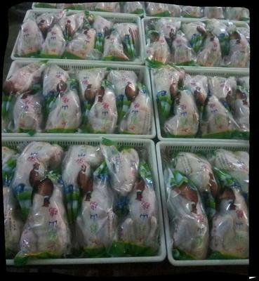 山东省济南市商河县白条鸡 冷冻