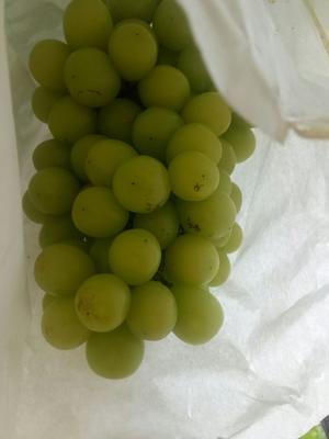 上海嘉定区阳光玫瑰 1.5- 2斤 5%以下 1次果