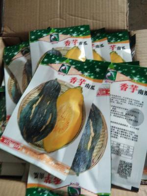 湖南省永州市江永县香芋南瓜种子 种子