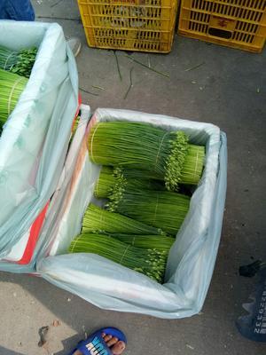广东省佛山市三水区韭菜花 二茬 20~30cm