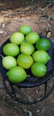 云南省普洱市澜沧拉祜族自治县越南青柠檬 2 - 2.6两