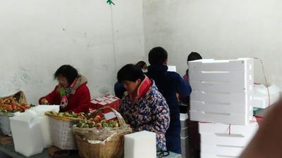 安徽省合肥市长丰县红颜草莓 30克以上