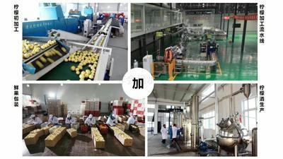 上海浦东新区安岳柠檬 3.3 - 4.5两