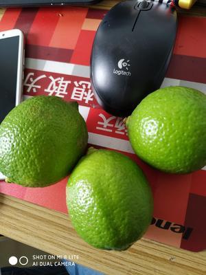 广东省河源市和平县台湾四季青柠檬 2 - 2.6两