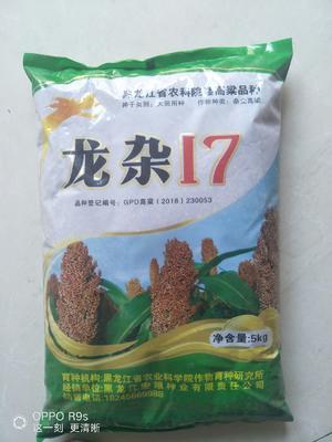 黑龙江省黑河市北安市龙杂18号高粱种子 杂交种 ≥85%