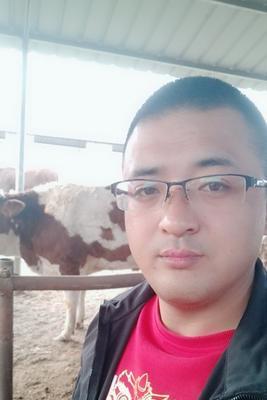 山西省忻州市定襄县肉牛 400-600斤 统货
