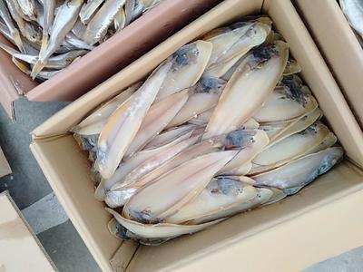 山东省滨州市沾化区咸鱼