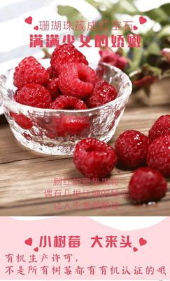广东省潮州市湘桥区红树莓 鲜果