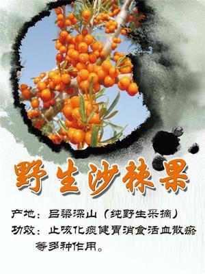 广东省潮州市湘桥区沙棘果 橙黄色