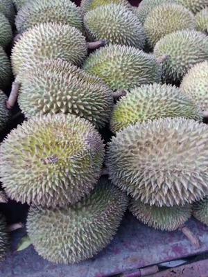 云南省德宏傣族景颇族自治州瑞丽市泰国榴莲 1.8公斤 40 - 50%以上