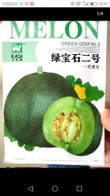 江苏省宿迁市沭阳县绿宝石甜瓜种子  杂交种 ≥90% 5克/代