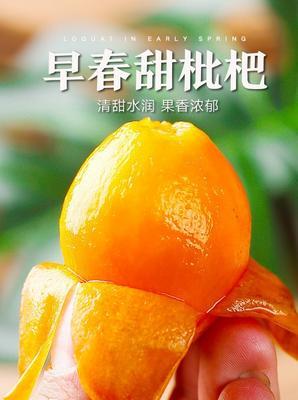 广东省潮州市湘桥区蒙自枇杷 0.4 - 0.7两