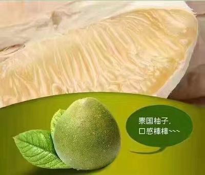 云南省西双版纳傣族自治州景洪市泰国青柚 2斤以上