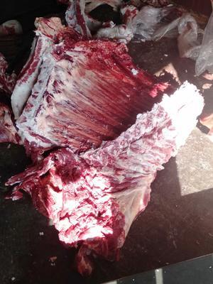 甘肃省兰州市七里河区肉牛 200斤以下 公牛