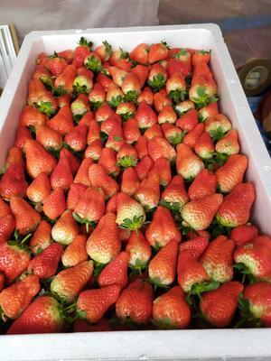 江苏省宿迁市沭阳县甜查理草莓 20克以上