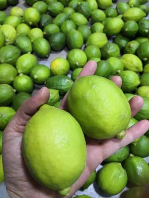 广西壮族自治区来宾市兴宾区台湾香水柠檬 1.6 - 2两