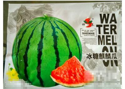 江苏省宿迁市沭阳县冰糖麒麟王西瓜种子 二倍体杂交种 ≥85%
