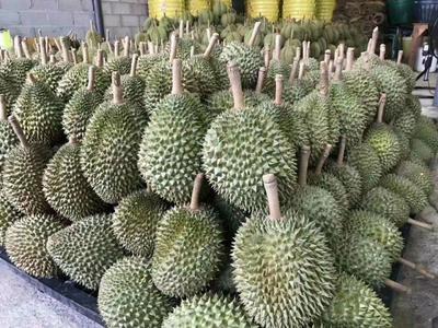 广西壮族自治区崇左市凭祥市托曼尼榴莲  2 - 3公斤 80 - 90%以上 1件包邮大部分地区