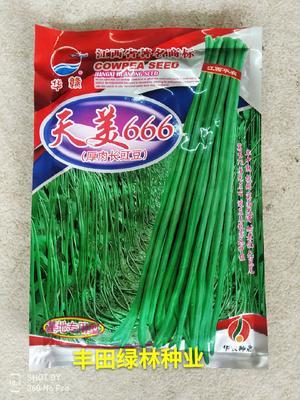 福建省漳州市南靖县油青豆角种子 ≥98%