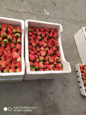 江苏省宿迁市沭阳县奶油草莓 20克以上