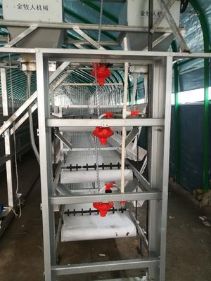 河南省驻马店市西平县自动捡蛋机