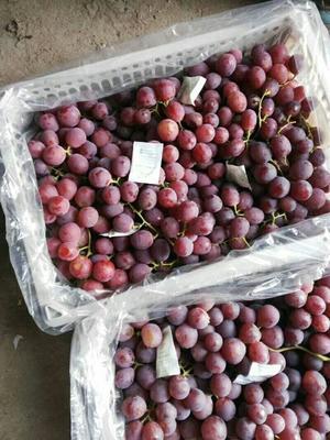 新疆维吾尔自治区昌吉回族自治州呼图壁县红提 1.5- 2斤 5%以下 1次果