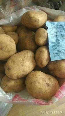 河南省郑州市金水区黄心土豆 2两以上