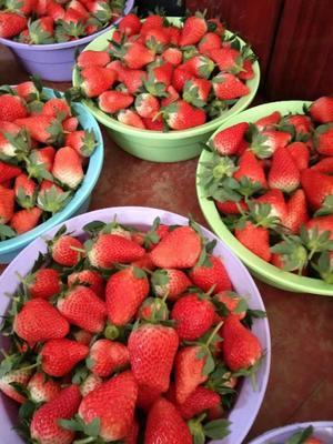 山东省泰安市岱岳区奶油草莓 20克以下