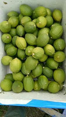 广西壮族自治区贵港市平南县香水柠檬 3.3 - 4.5两