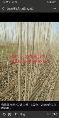 山东省聊城市茌平县107杨