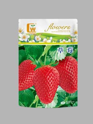 甘肃省酒泉市肃州区草莓种子