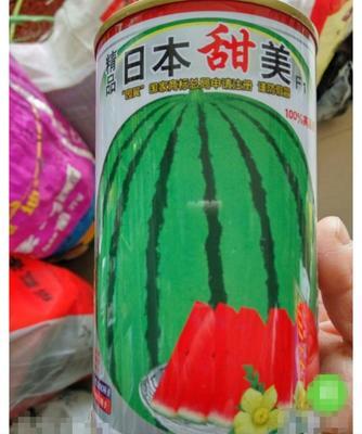 江苏省宿迁市沭阳县日本甜美 二倍体杂交种 ≥85%