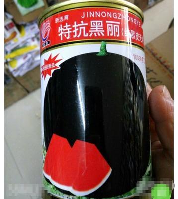 江苏省宿迁市沭阳县无籽西瓜种子  二倍体杂交种 ≥85% 黑丽无籽50克/罐