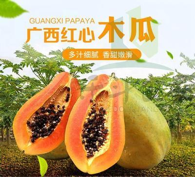 河南省洛阳市栾川县红心木瓜 1.5 - 2斤
