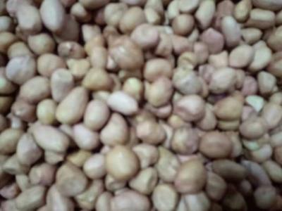 河北省石家庄市鹿泉区白皮花生米 12-18个月 散装