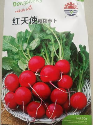 山东省济南市历城区樱桃萝卜种子 良种