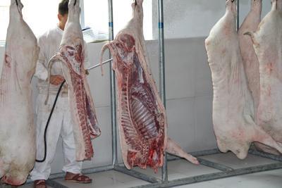 河北省保定市北市区土猪 60斤以上