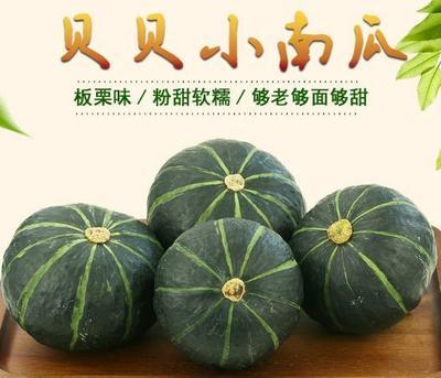 陕西省西安市阎良区贝贝南瓜 1斤以下