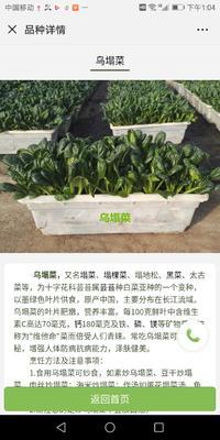 河北省保定市蠡县蔬菜种植盆栽