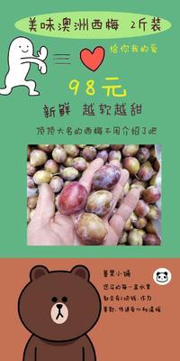 北京丰台区智利西梅  35-40mm 澳洲西梅 人体清道夫