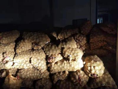 甘肃省张掖市山丹县大西洋土豆 1~2两