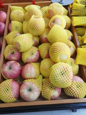 浙江省金华市浦江县红富士苹果 90mm以上 条红 膜袋