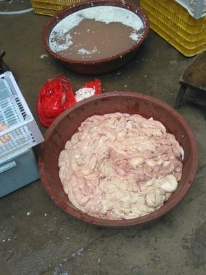 广西壮族自治区钦州市钦北区猪肠