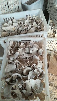 山东省济宁市邹城市紫薯干 1年 条状 袋装
