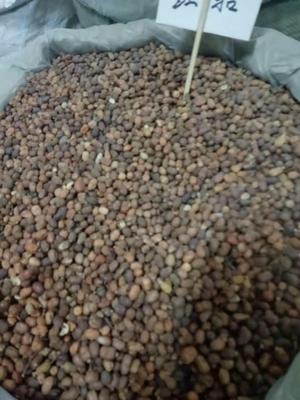 河北省石家庄市鹿泉区馍豆豆  12-18个月 优质红蔻