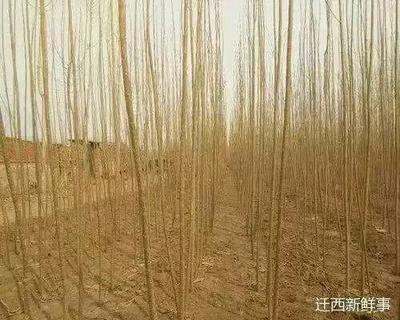 河北省唐山市迁西县河北杨