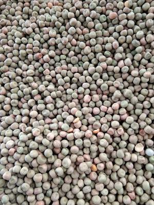 山东省青岛市黄岛区干麻豌豆