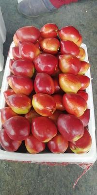 河南省周口市川汇区126油桃 2两以上 55mm以上
