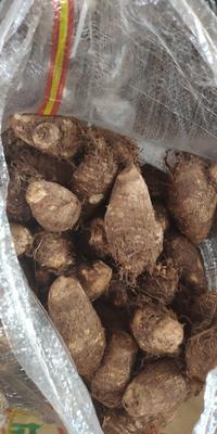 山东省潍坊市安丘市毛芋头 6cm以上